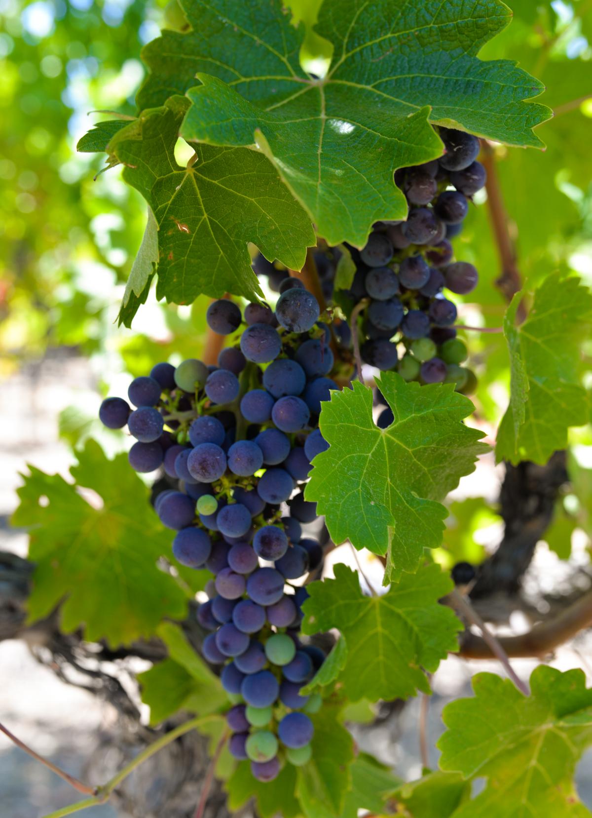 Murrieta's Well Winery Livermore-18