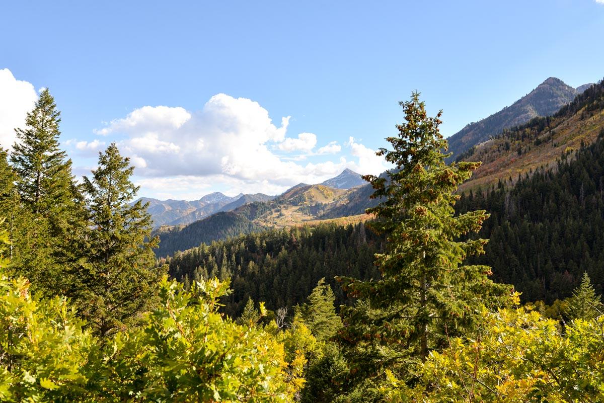 Stacie Flinner Alpine Loop Road