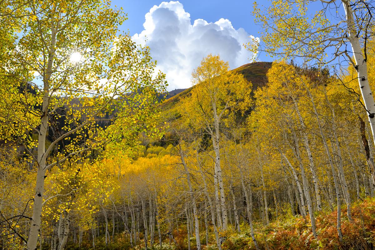 Stacie Flinner Alpine Loop Road Utah