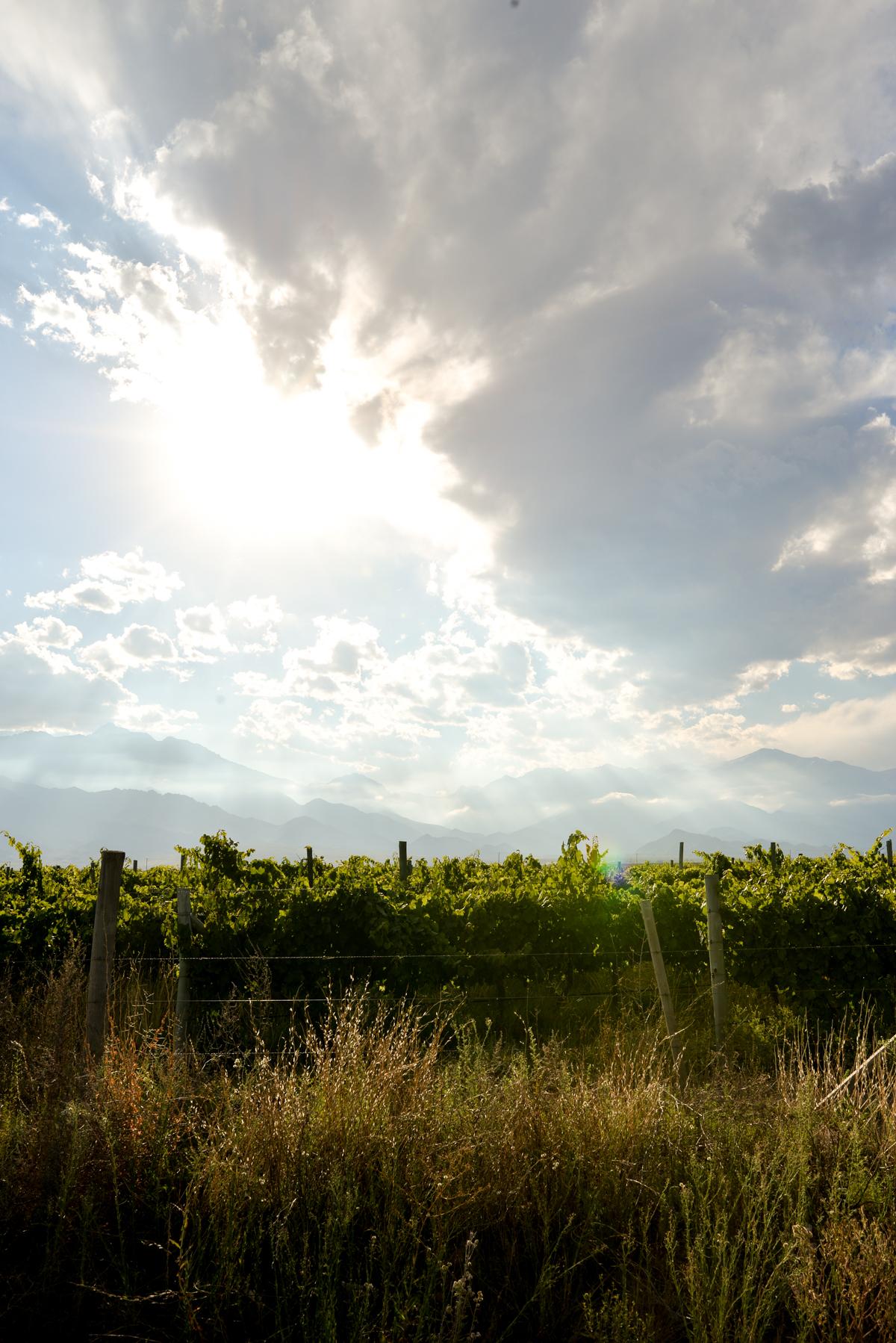 Stacie-Flinner-Best-Mendoza-Winery-14