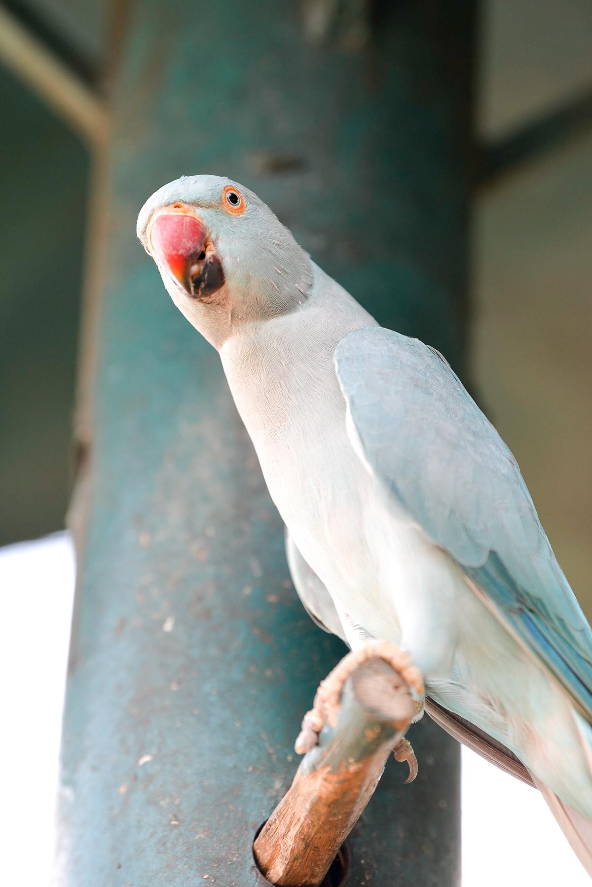 Stacie Flinner Kuala Lumpur Bird Park -1.jpg