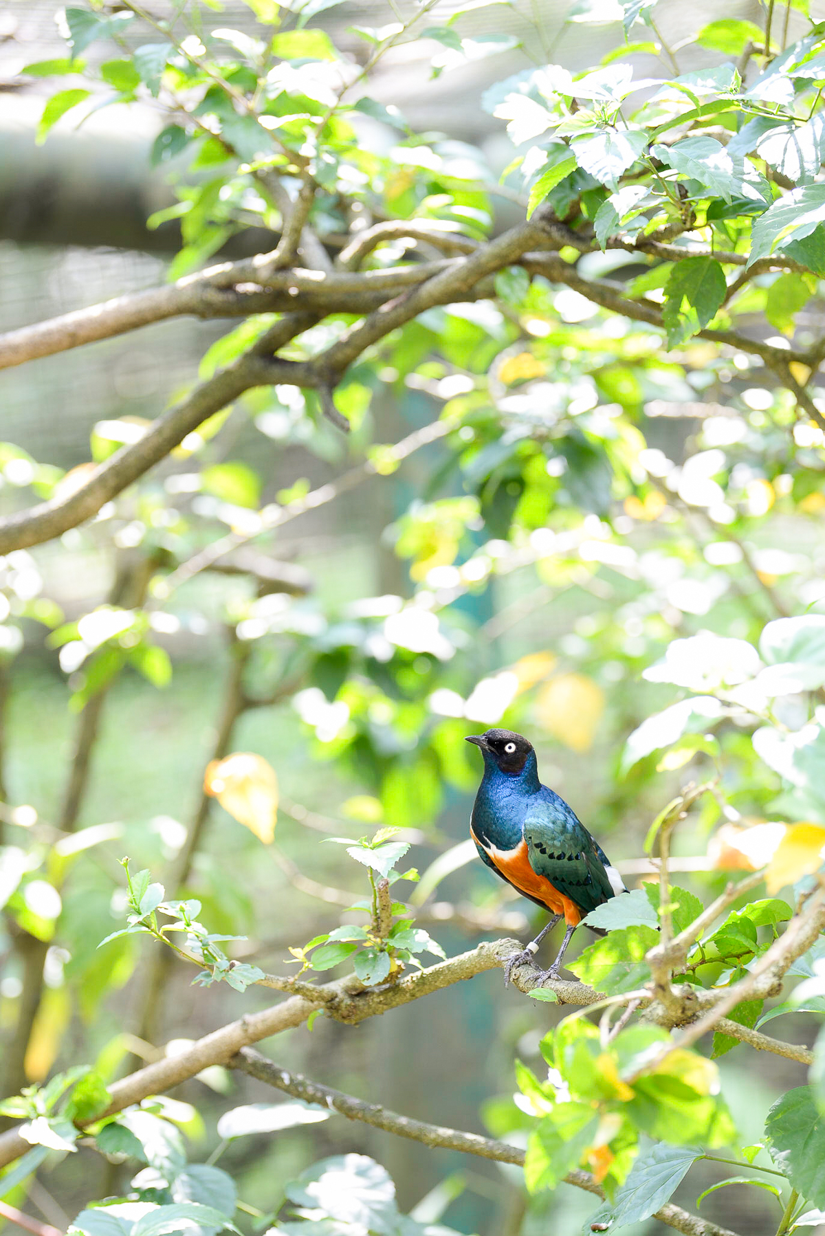 Stacie Flinner Kuala Lumpur Bird Park -12.jpg