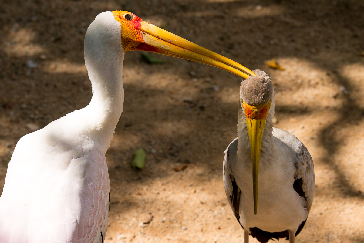 Stacie Flinner Kuala Lumpur Bird Park -16.jpg