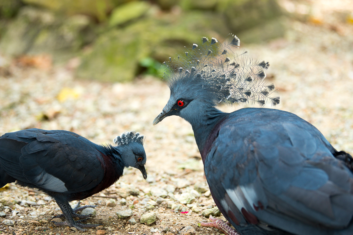 Stacie Flinner Kuala Lumpur Bird Park -18.jpg