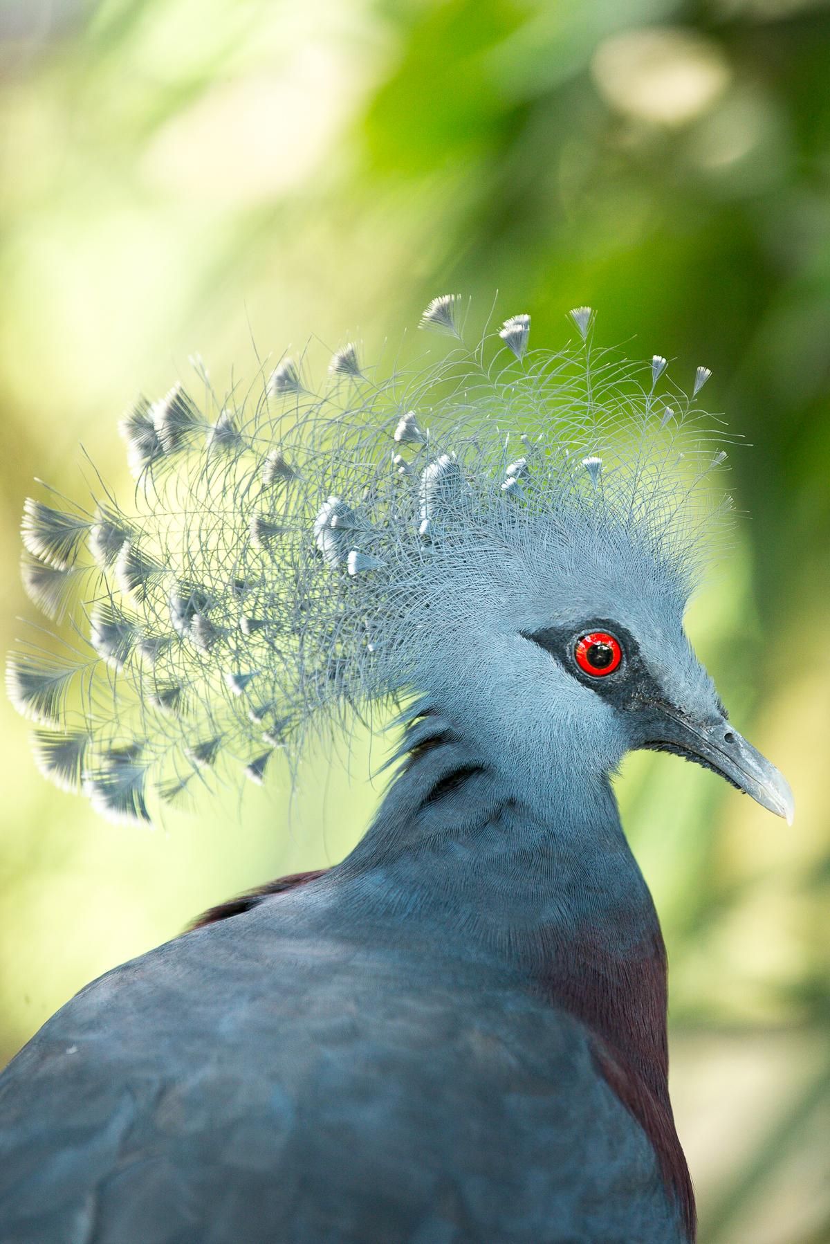 Stacie Flinner Kuala Lumpur Bird Park -19.jpg