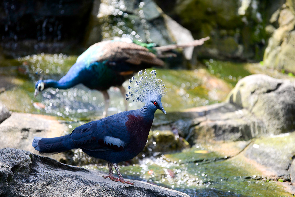 Stacie Flinner Kuala Lumpur Bird Park -2.jpg