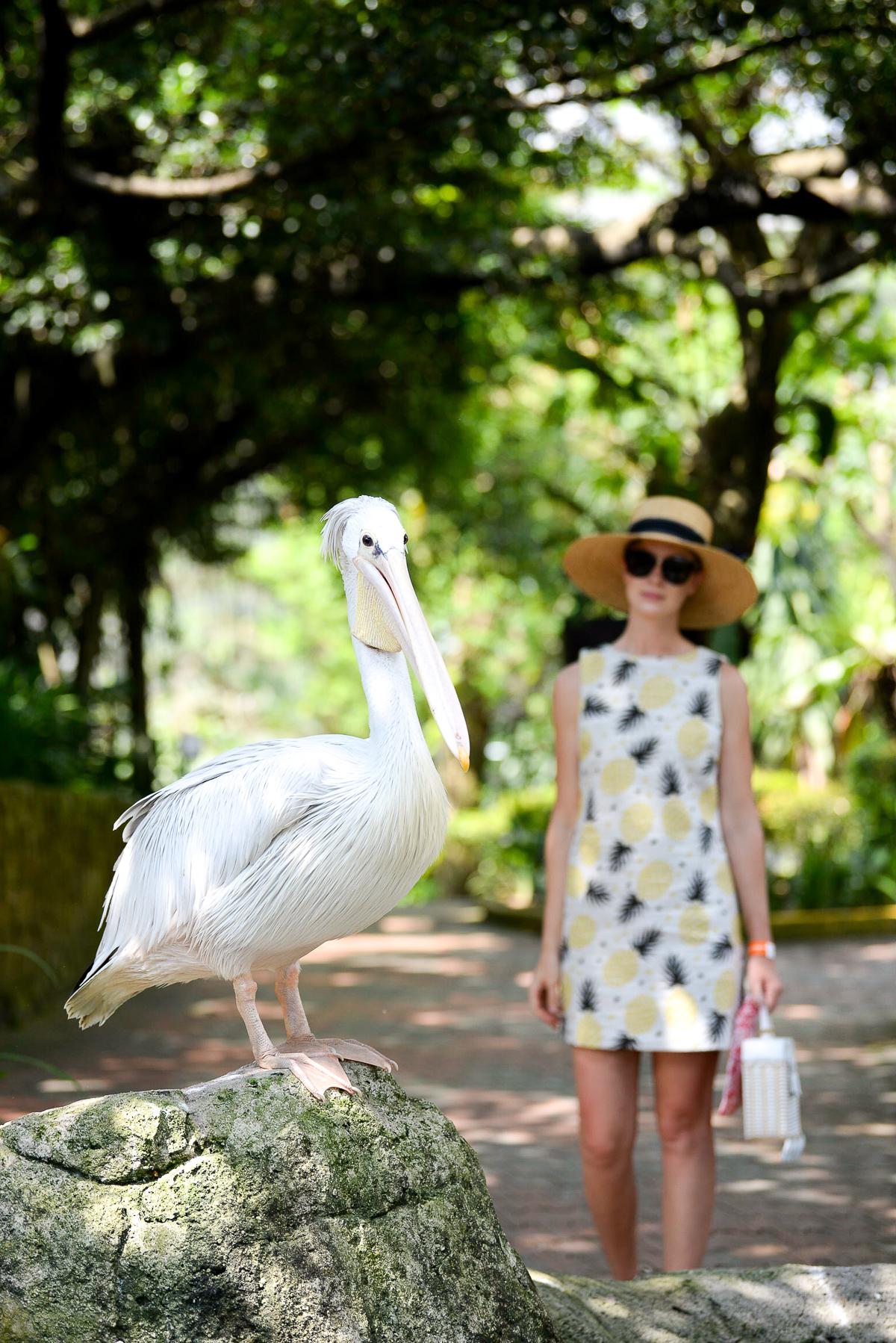 Stacie Flinner Kuala Lumpur Bird Park -5.jpg