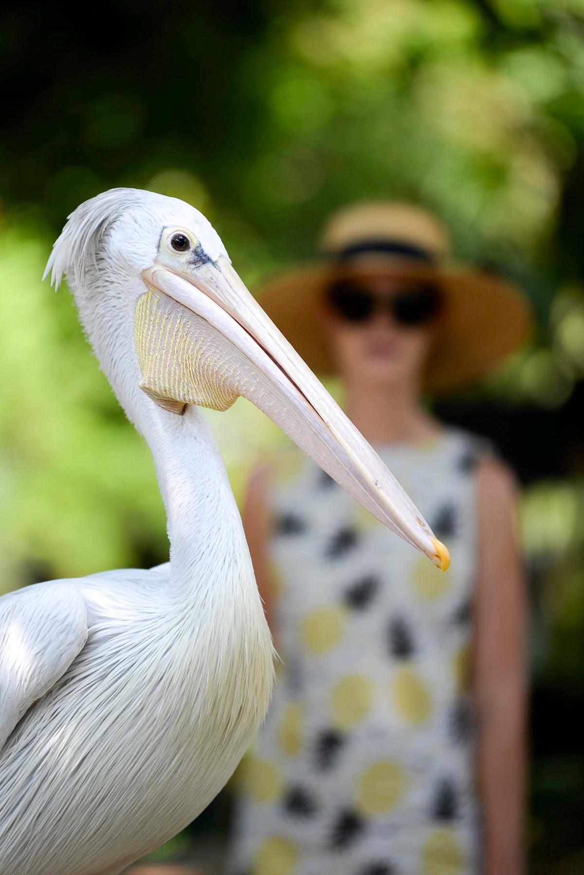 Stacie Flinner Kuala Lumpur Bird Park -6.jpg
