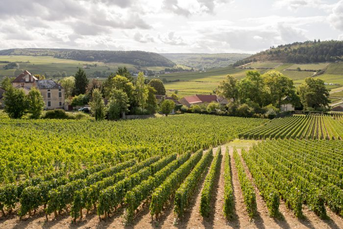 Food and Wine in Burgundy