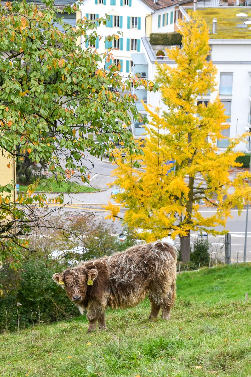 Stacie Flinner Lucerne Switzerland-40.jpg