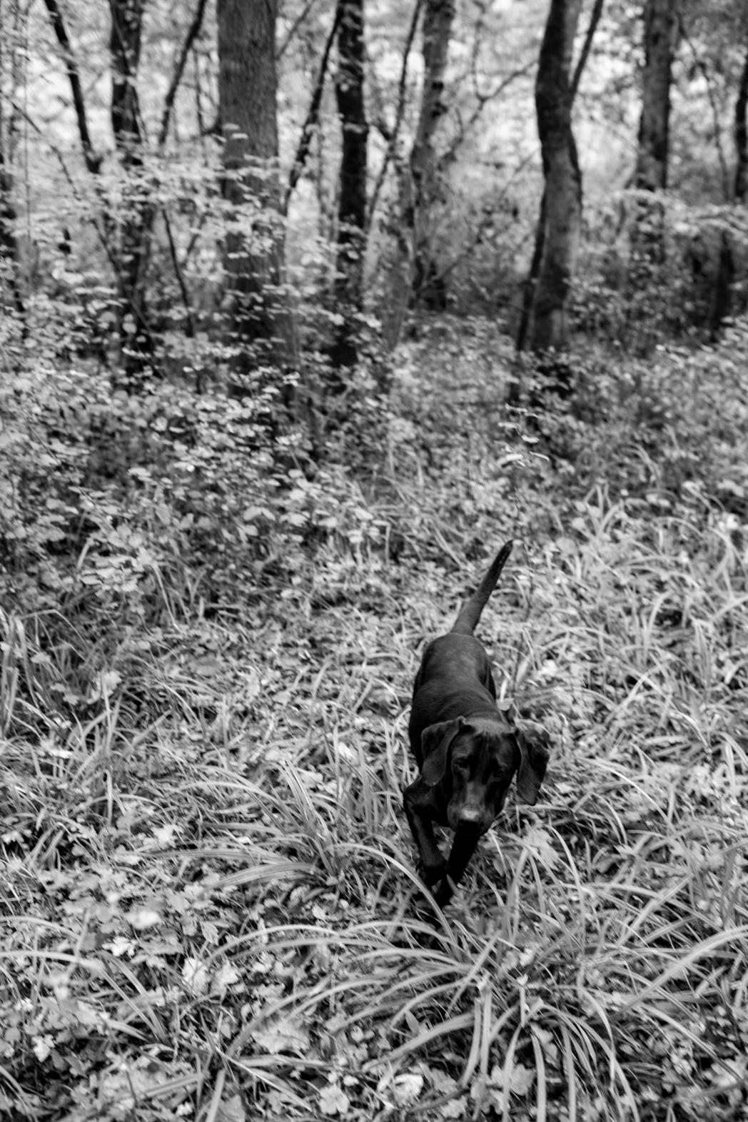Stacie Flinner Truffle Hunting Istria-3.jpg