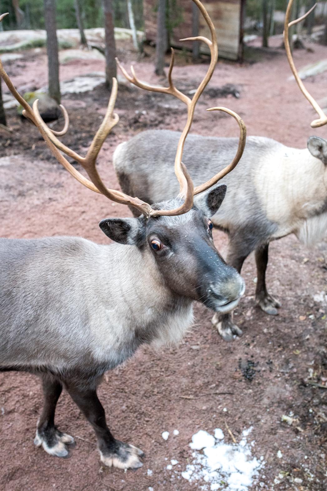 Stacie Flinner Christmas in Helskini Finland-16.jpg