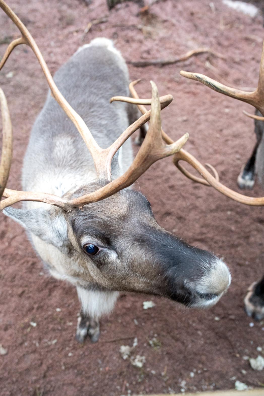 Stacie Flinner Christmas in Helskini Finland-17.jpg