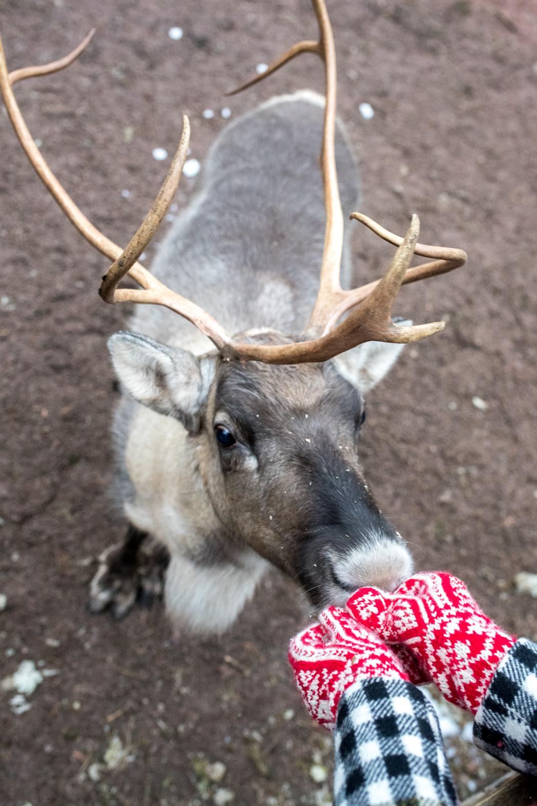 Stacie Flinner Christmas in Helskini Finland-26.jpg