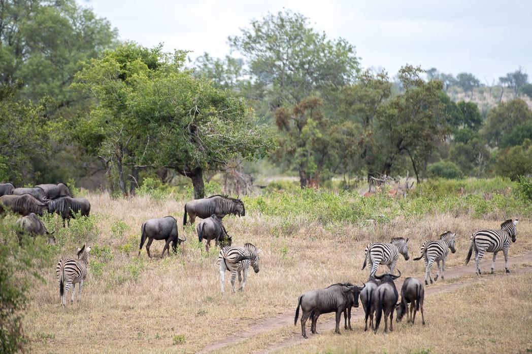 Stacie Flinner Sabi Sabi Selati Camp Kruger-1.jpg