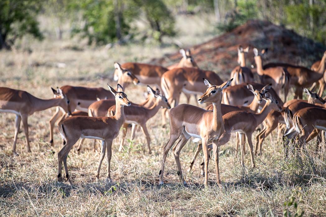 Stacie Flinner Sabi Sabi Selati Camp Kruger-11.jpg