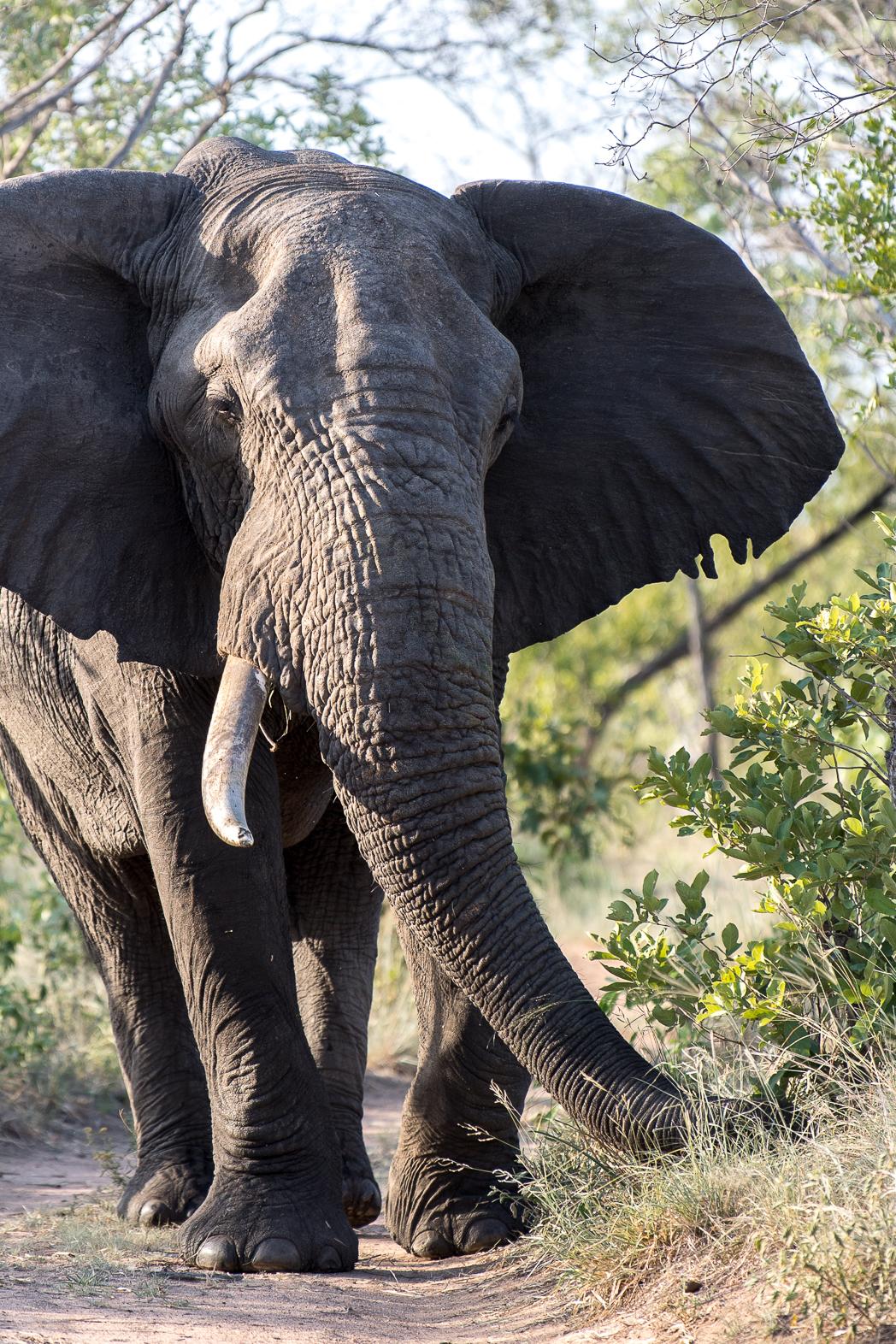Stacie Flinner Sabi Sabi Selati Camp Kruger-12.jpg