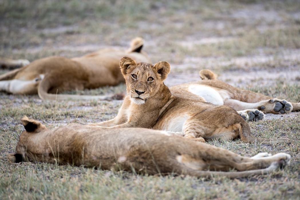 Stacie Flinner Sabi Sabi Selati Camp Kruger-15.jpg