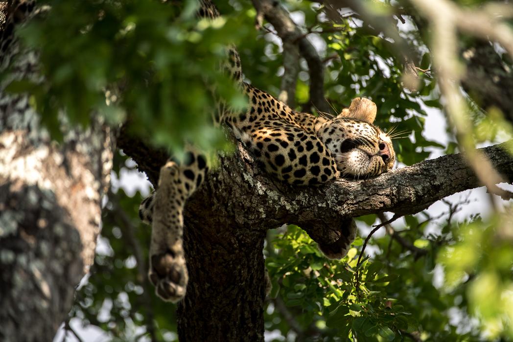 Stacie Flinner Sabi Sabi Selati Camp Kruger-19.jpg
