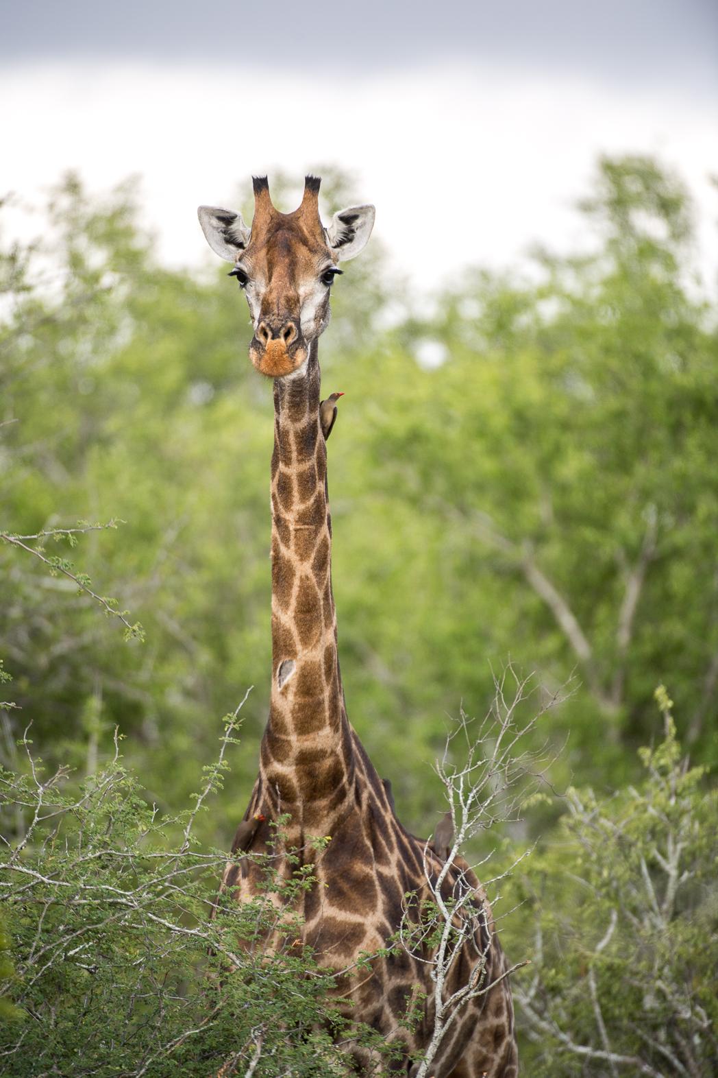 Stacie Flinner Sabi Sabi Selati Camp Kruger-20.jpg