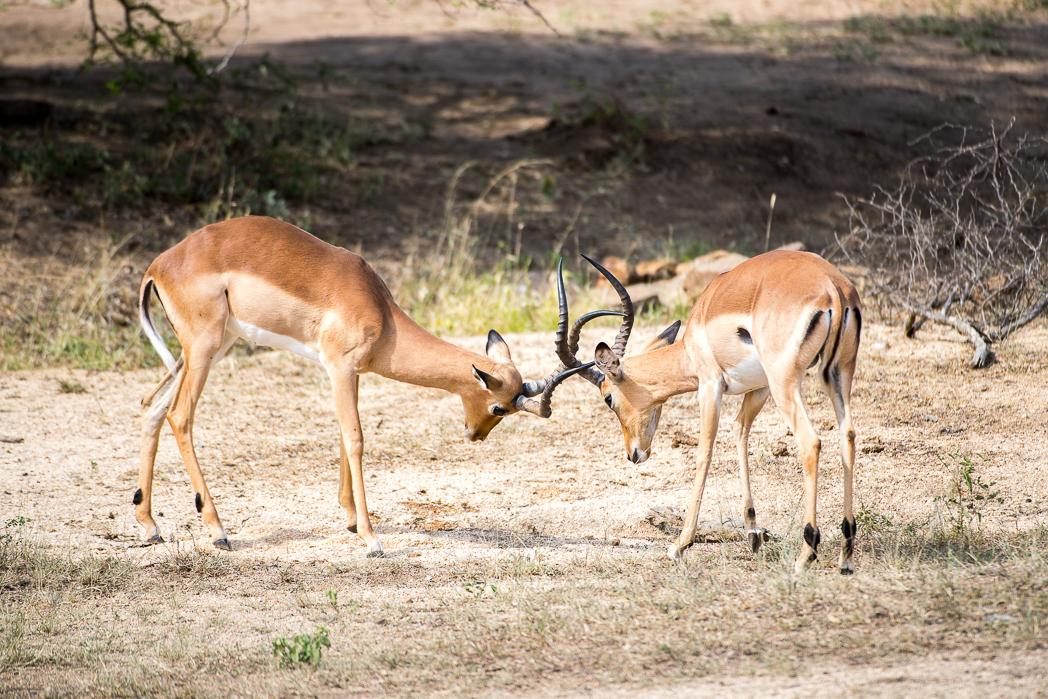 Stacie Flinner Sabi Sabi Selati Camp Kruger-22.jpg