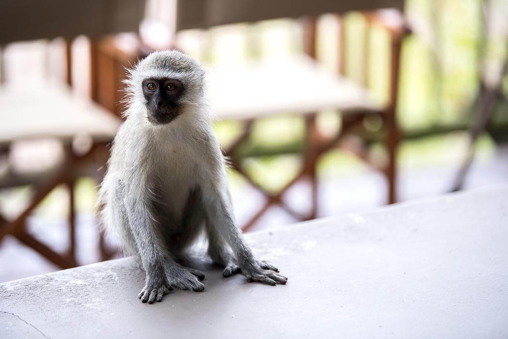 Stacie Flinner Sabi Sabi Selati Camp Kruger-34.jpg