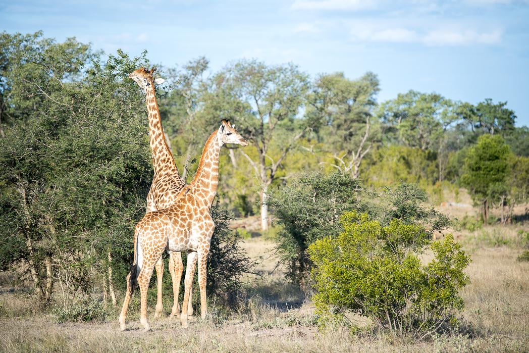 Stacie Flinner Sabi Sabi Selati Camp Kruger-36.jpg