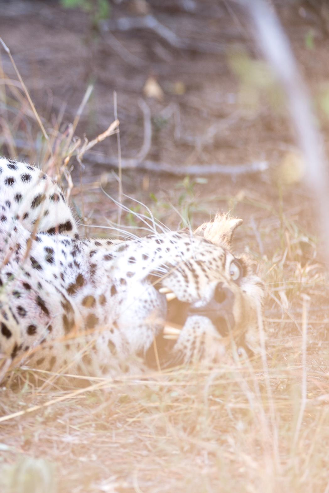 Stacie Flinner Sabi Sabi Selati Camp Kruger-37.jpg