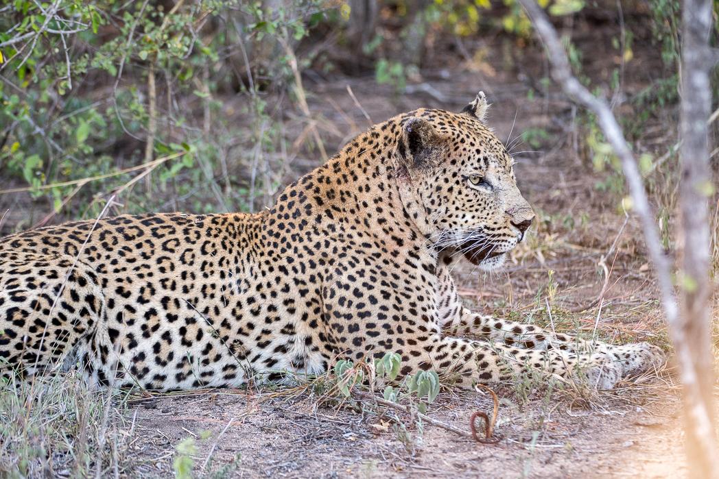Stacie Flinner Sabi Sabi Selati Camp Kruger-38.jpg