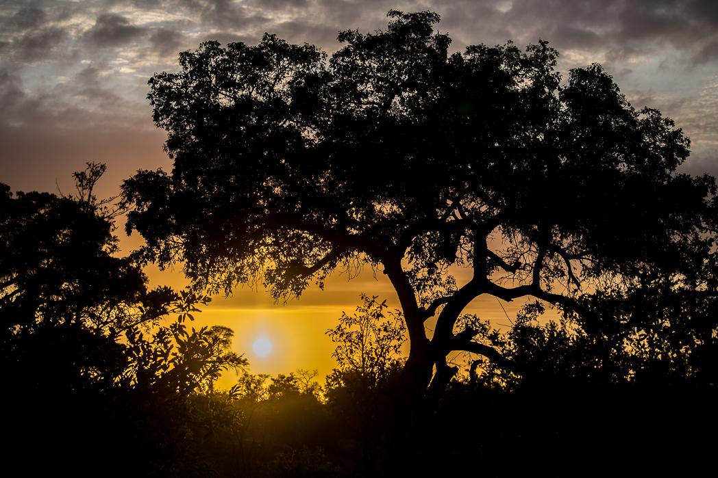 Stacie Flinner Sabi Sabi Selati Camp Kruger-42.jpg