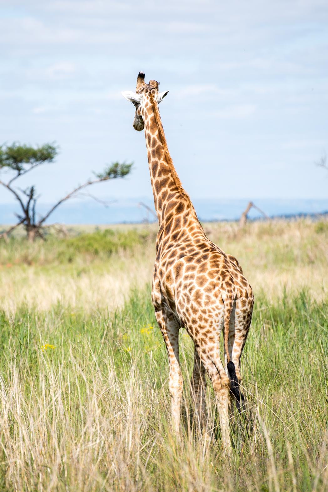 Stacie Flinner x Rovos Rail Durban Safari Nambiti-1