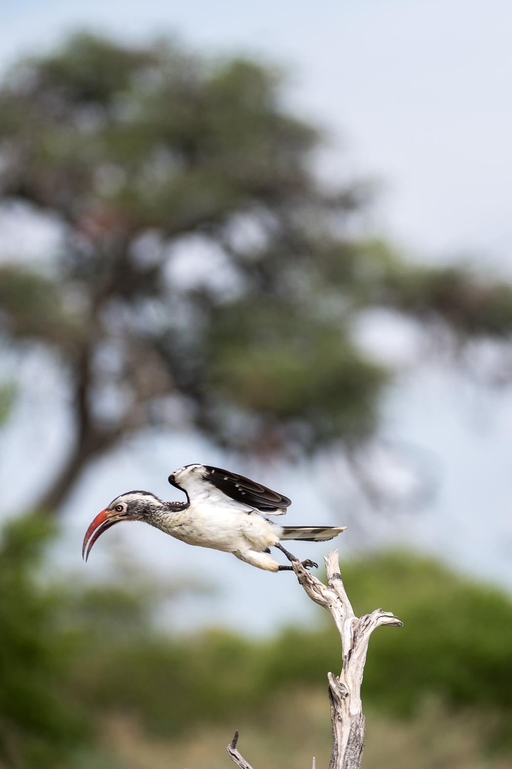 Stacie Flinner x Sanctuary Retreats Baines Camp Botswana-24.jpg