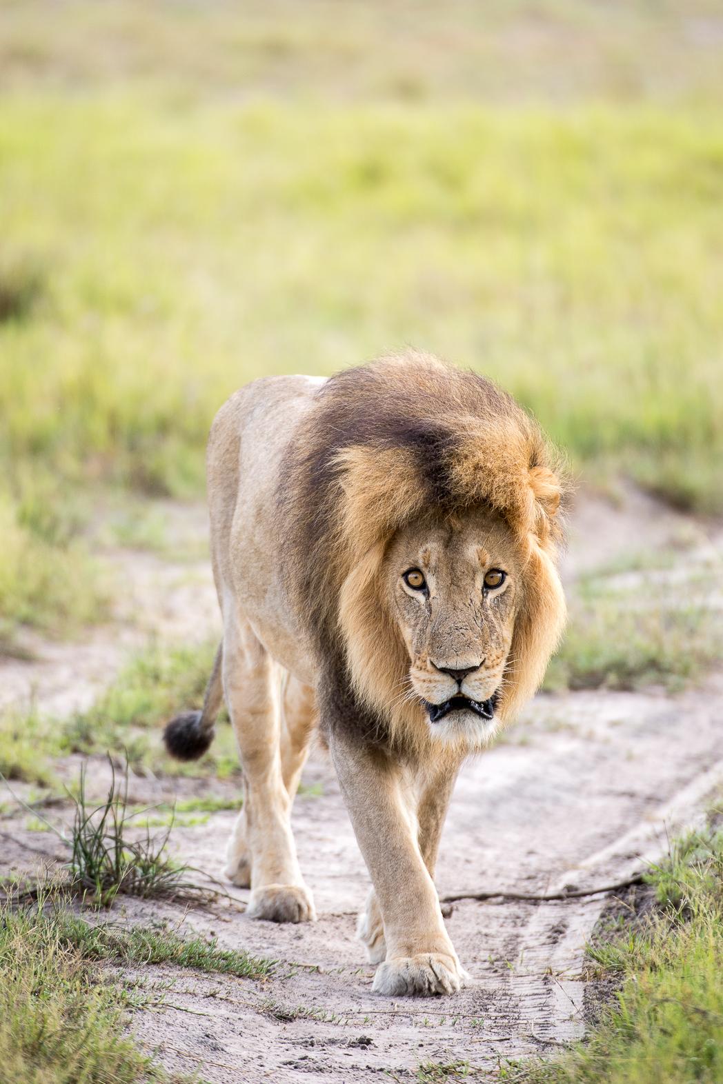 Stacie Flinner x Sanctuary Retreats Chiefs Camp Botswana-25.jpg