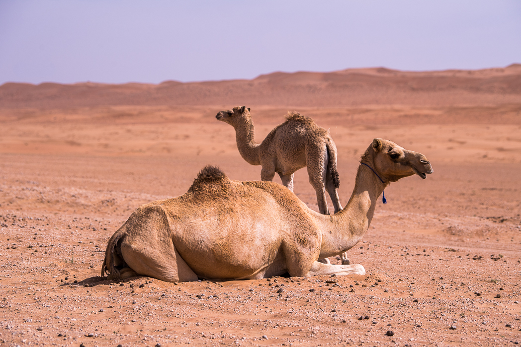 Stacie Flinner Hud Hud Travels Glamping Oman-27.jpg