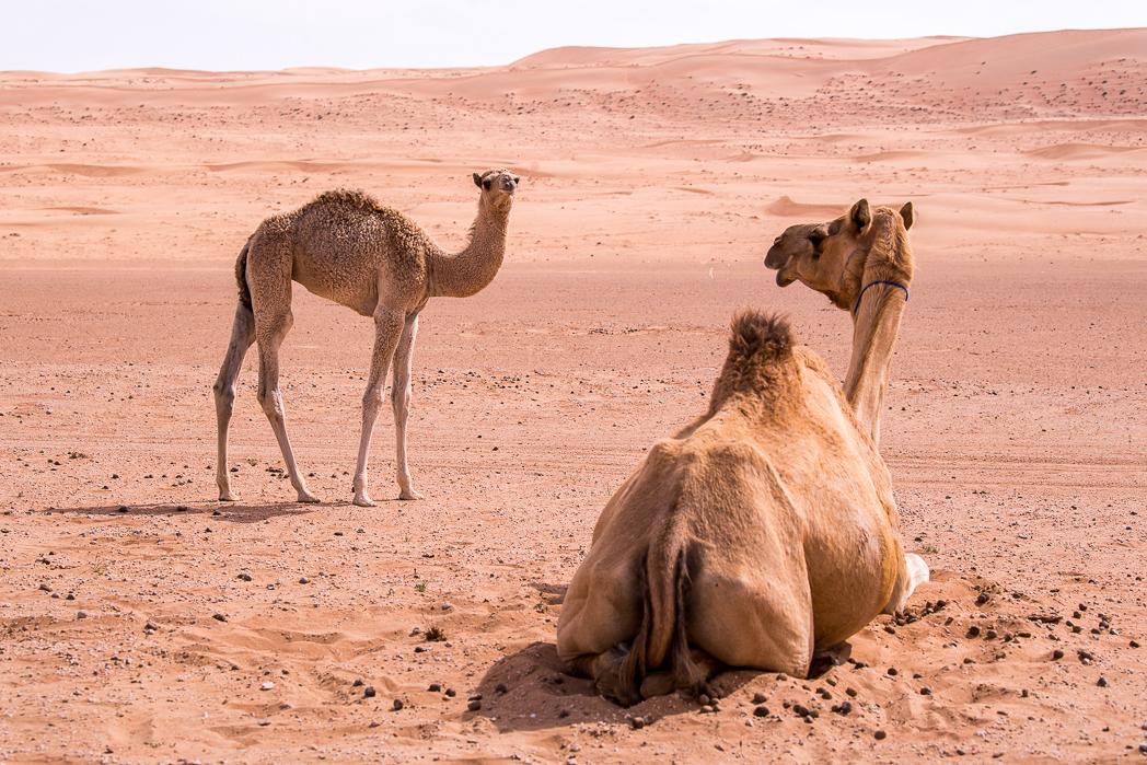 Stacie Flinner Hud Hud Travels Glamping Oman-31.jpg