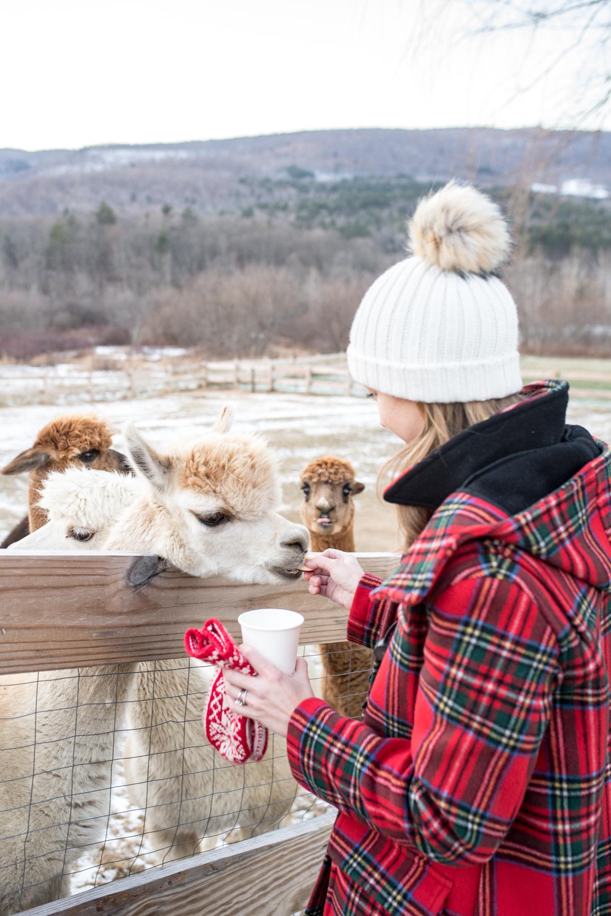 Stacie Flinner Southern Vermont Guide Hill Farm Inn-31.jpg
