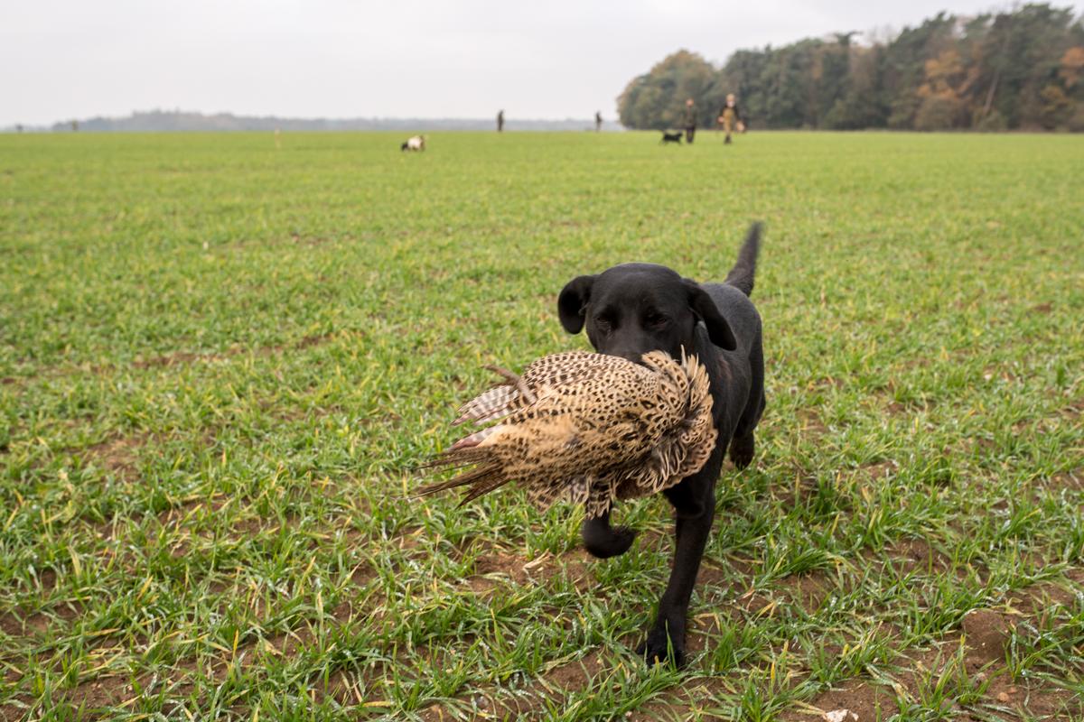 Euston Hall Pheasant Hunt Sporting Weekend-31.jpg