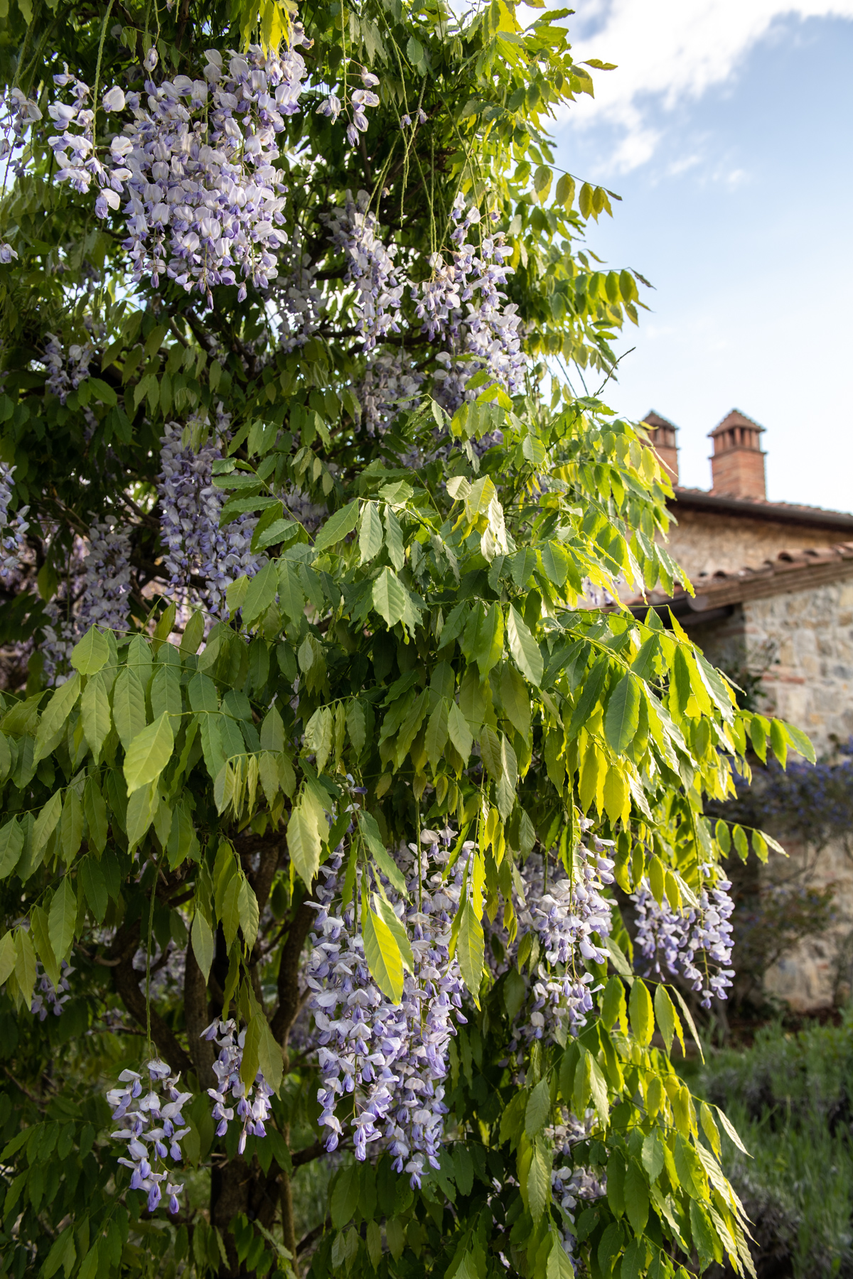 Stacie Flinner x Cuvee Tuscan Farmhouse Tuscany Italy Guide-17.jpg